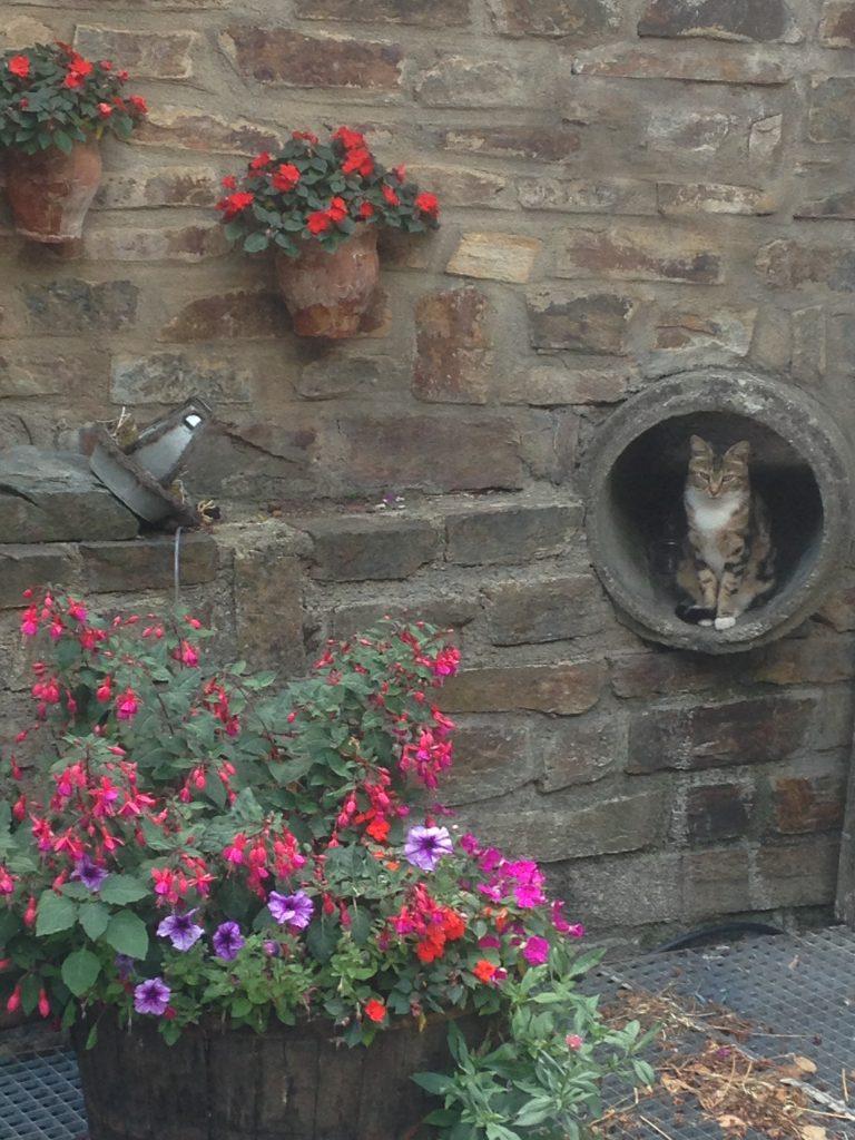 gato escondido Lastours. otros sitios